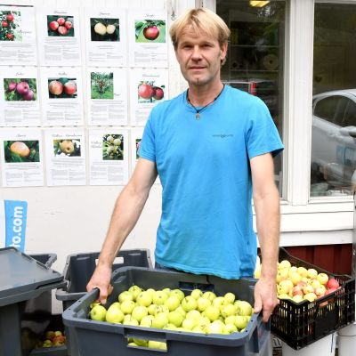 Man i blå t-skjorta håller en låda med äpplen.
