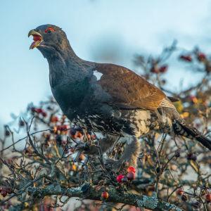 fågel i träd