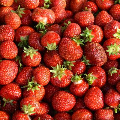 En massa jordgubbar fotograferade rakt uppifrån.