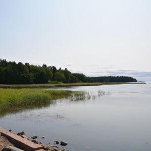 På bilden syns en skogbevuxen udde i Lovisaviken. Här kommer Drottningstranden att byggas.