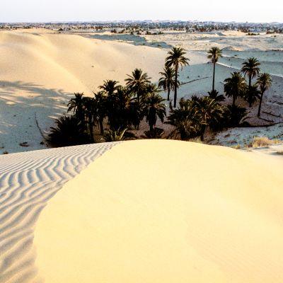 Sahara kasvillisuus