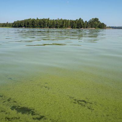 sinileväpuuroa meressä