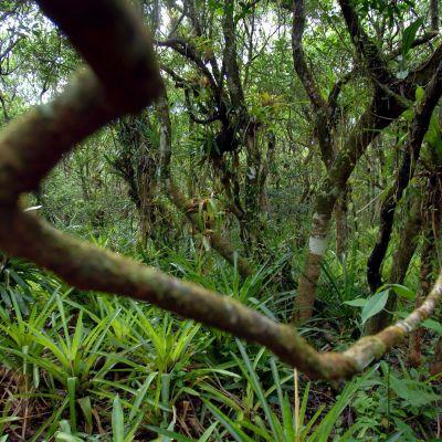 Sademetsän puita ja muuta kasvillisuutta.