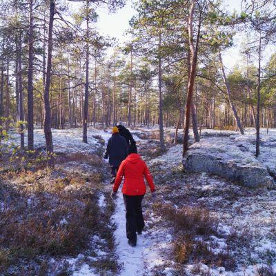 Tornberget består av kargt bergsområde och tallskog.
