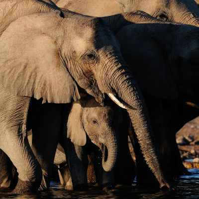 Norsu ja norsunpoikanen vesilähteellä.