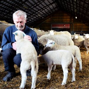 Jukka Tobiasson med några lamm i ett fårhus.