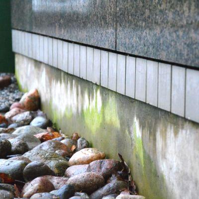 En husvägg med synligt mögel på sockeln.