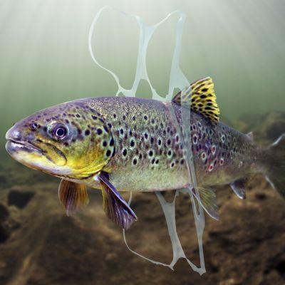 Kala on jäänyt muoviroskan vangiksi.