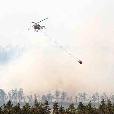 Pelastushelikopteri kaataa vettä metsään Ljusdalissa.