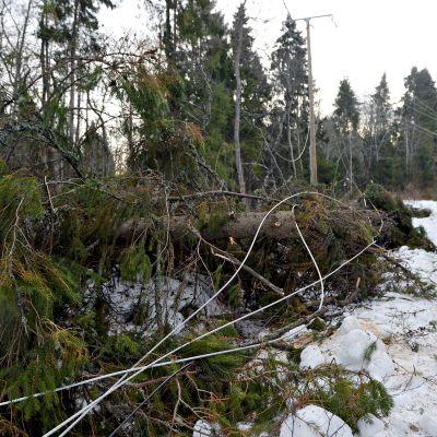 Myrskyn katkomaa sähkölinjaa Vaasassa 2. tammikuuta 2019.