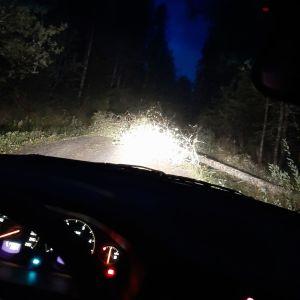 Träd blåst ner över Norrfjärdsvägen i Västerhankmo. Flera träd över ellinje.