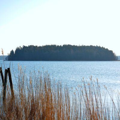 skärgård med vatten, vass och en ö i bakgrunden