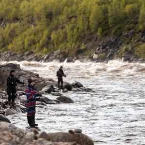 Kalastajia Tenon rannassa heittämässä uistinta tai perhoa.