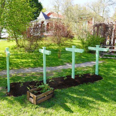 En trädgård.