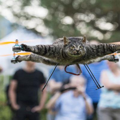 täytetty kissa lentää dronen avulla