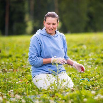 Harkovasta Ukrainasta kotoisin oleva Anna Korniets kerää mansikoita Mattilan luomutilalla Nurmijärvellä. Hän kehuu olosuhteita erinomaisiksi.