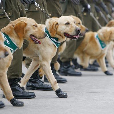 Poliiseja ja koiria paraatissa