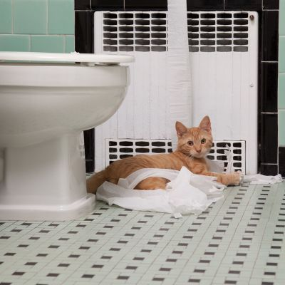 Kissa kylpyhuoneen lattialla.