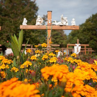 kukkia ja hautoja