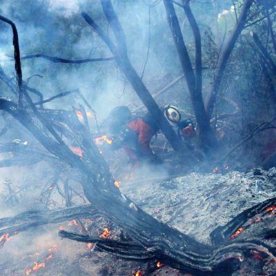 Palomies taistelee tulta vastaan Kaliforniassa.