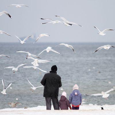 Isä ja lapset ruokkivat lokkeja itämeren rannalla Gdańskissa.