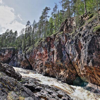 Kiutaköngäs Oulangan kansallispuistossa.