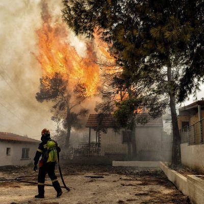 Kreikan maastopalot ovat surmanneet jo kymmeniä – ihmisiä evakuoitiin rannalta veneillä