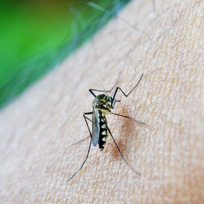 Hyttynen