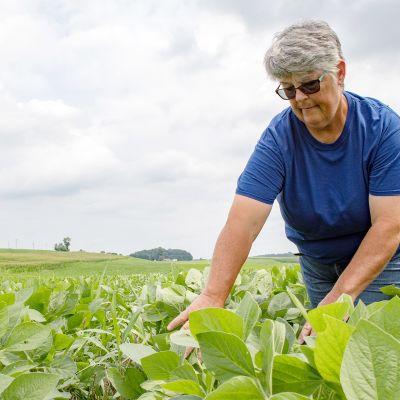 Soijafarmari Belinda Burrier tutkii soijakasveja kotitilallaan Union Bridgessä.
