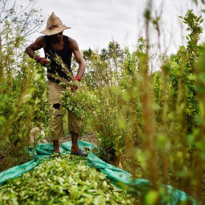 Venezuelalainen maahnmuuttaja työntekijänä.