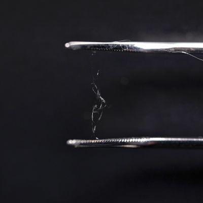 Nestemäisestä, siirapinomaisesta silkkiproteiinista syntyy vahvaa ja joustavaa kuitua.