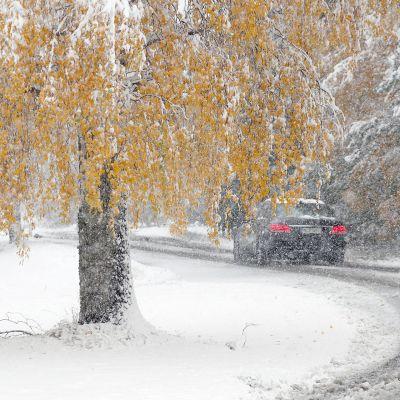 Lumisateinen syysmaisema Joensuun Heinävaarassa.