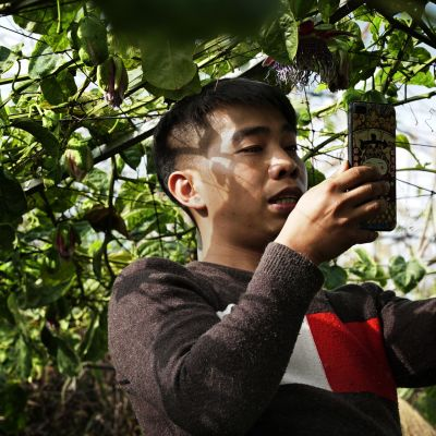 Hedelmätarhuri Zheng Zhihong alkoi tehdä videoita kiinalaisiin lyhytvideosovelluksiin toissa vuonna. Hedelmien myynti lähti huimaan nousuun.