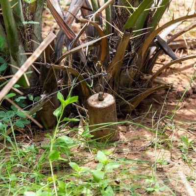 Maamiina pensaan juurella.