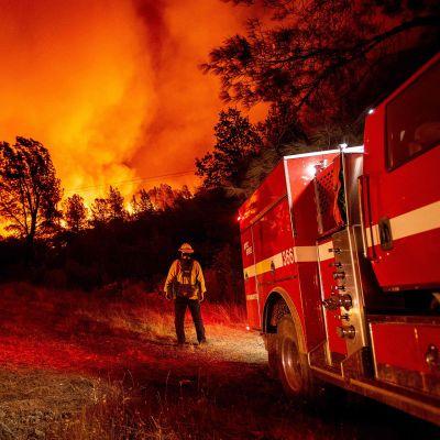 Palomies katselee rajusti liekehtivää metsää.