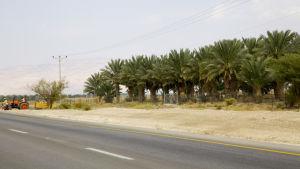 De sraeliska bosättningarnas odlingar sprider ut sig på palestinska Västbanken.
