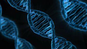 DNA kaksoisketju