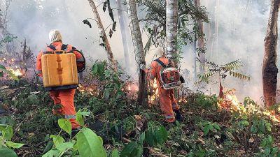 Två brandmän går i brinnande regnskog i Amazonas.