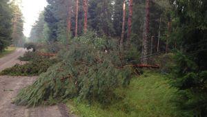 Omkullfallna träd efter ett åskväder i Bromarv.