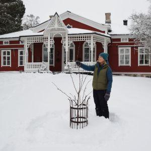 Trädgårdsmästare Lena Gillberg väljer ut vilken gren på äppelträdet som ska bli topp