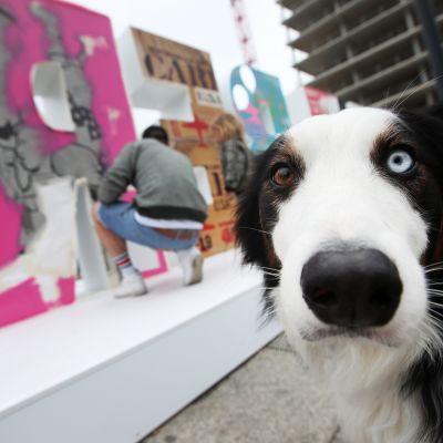 Koira katsoo kameraan ja taustalla näkyy taiteilija joka viimeistelee taideteosta Berliinissä.