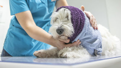 En hund inlindad i en handduk.