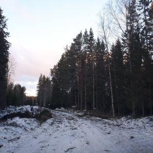 Fallna träd längs vintrig väg.