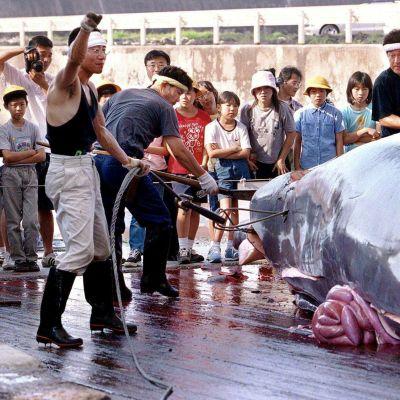 Kalastajat paloittelevat valasta.