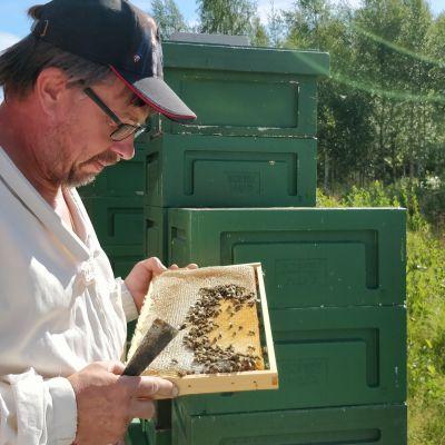 Markku Mykkälä hunajakenno kädessään