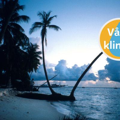 Maldiverna.
