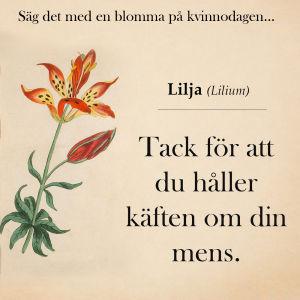 Lilja