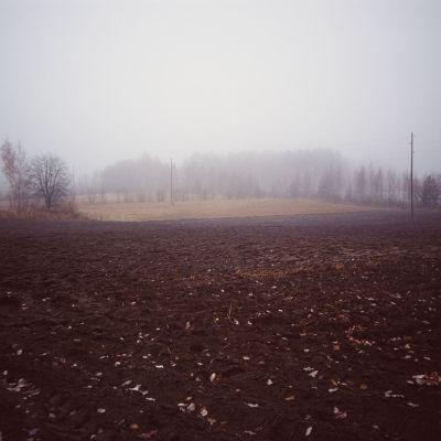 Dimma över åker