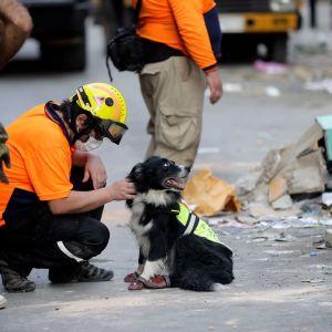 Chileläinen pelatustyöntekijä rapsutti vainukoiraa tuhoalueella Beirutissa torstaina.
