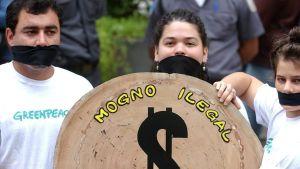 Greenpeaceaktivister demonstrerar mot illegal skogsavverkning